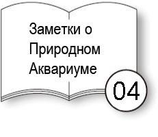 notesna_4