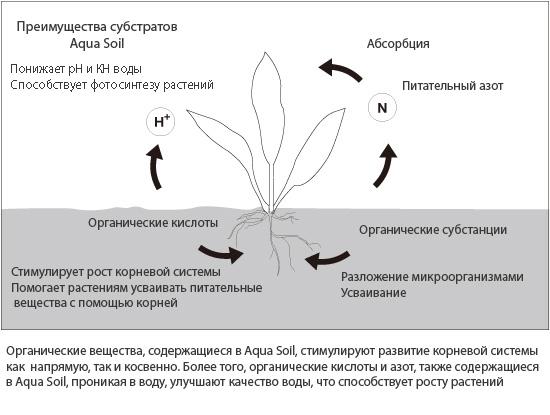 scheme_ecosystem