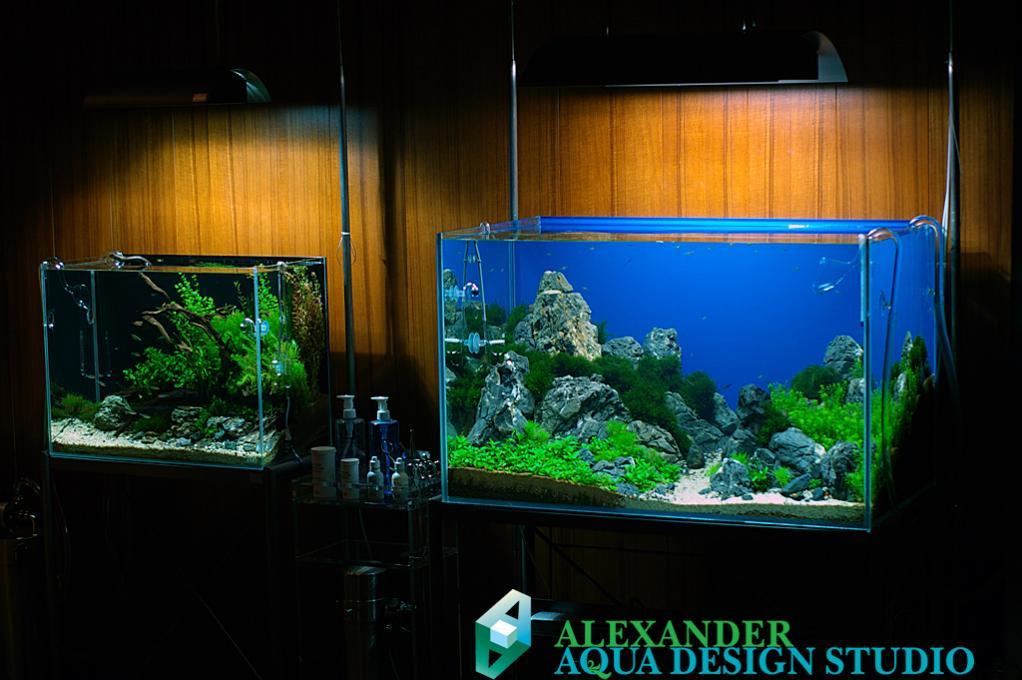 Выставлялось два аквариума.
