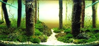 Лісова стежина