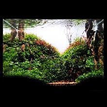 A Garden in Forest
