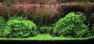 Plant Hills